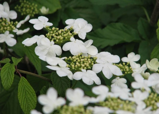 Gardens-Cornwall-Burncoose-Nursery-Penventon-Hotel