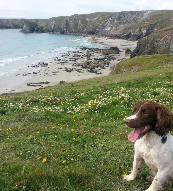 dog-friendly-breaks-cornwall-penventon-park-hotel
