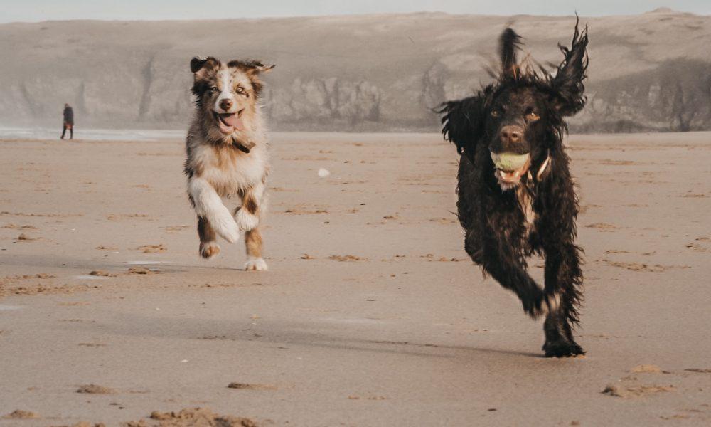 beach-run-penventon-park-hotel-cornwall-dog-friendly