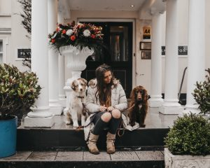 DapperMaximus-Cornwall-Dogs