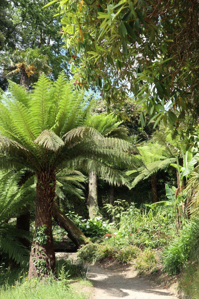lost gardens of heligan cornwall