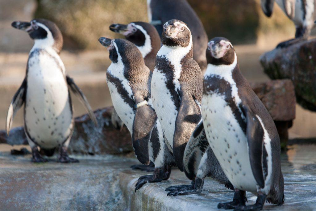 Penguins at Paradise Easter Break Cornwall