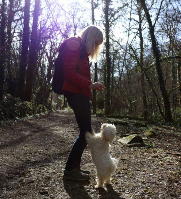 Dog walking at Tehidy near Penventon Park Hotel in Cornwall