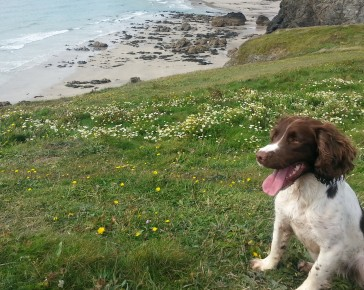 Explore-Cornwall-pet-friendly-hotel-Penventon
